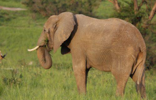 10 Days Uganda Wildlife Safari & Gorilla Trekking