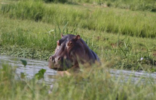 Uganda Gorilla Safari, Wildlife & Rafting Trip