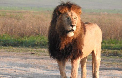 Ngorongoro Conservation Area from Arusha