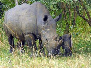 Ziwa Rhino Sanctuary reopened to tourists