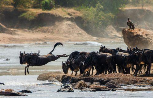 serengeti - Luxury Tanzania Safari