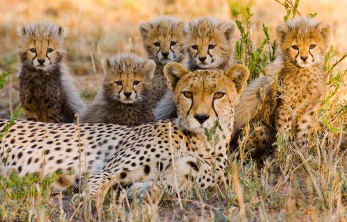 - Luxury Tanzania Safaris serengeti Tour