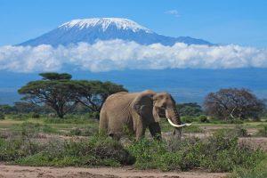 Kilimanjaro rises above the Tsavo