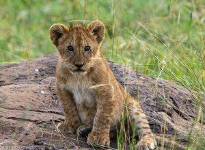 The Maasai Mara Ecosystem