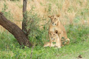 3 Days Serengeti Tour