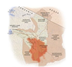April: the herds start migrating north, through Moru Kopjes and Seronera areas