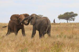 Camping Safari Tanzania budget