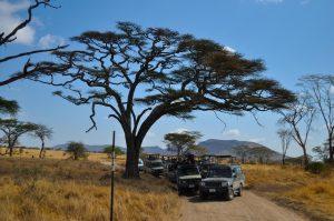 Game Drives in Serengeti
