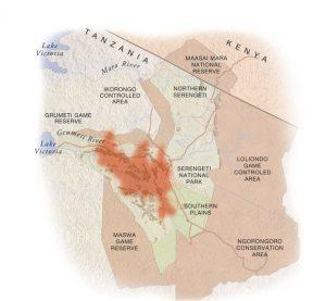 "May: the migration heads north through Seronera towards the Western Corridor"""