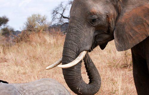 Budget Tanzania Safari