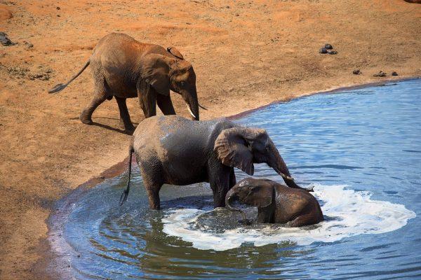 Amboseli National Park Wildlife