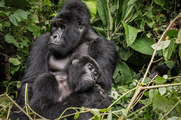 Photographic Safaris in Congo