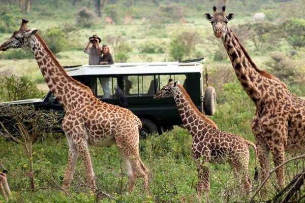 Photographic Safaris in Rwanda