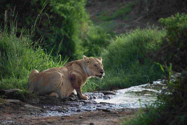 Murchison Falls National Park Animals