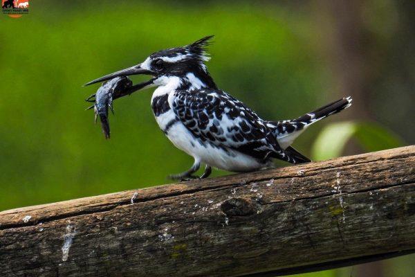 Bird watching around Rock Resort @ Lake Bunyonyi