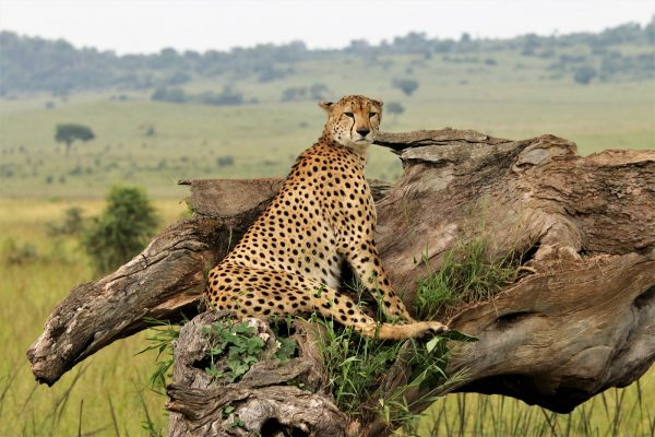 Wildlife viewing in Kidepo National Park