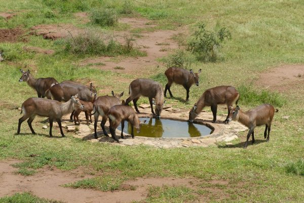 Wildlife viewing tours in Kidepo National Park