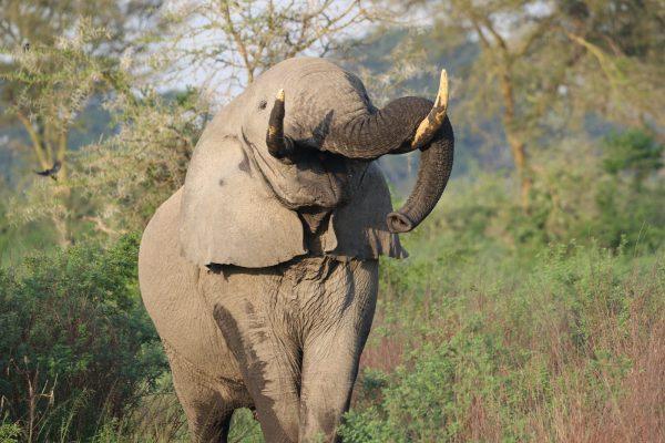 wildlife around Ishasha Wilderness Tented Camp